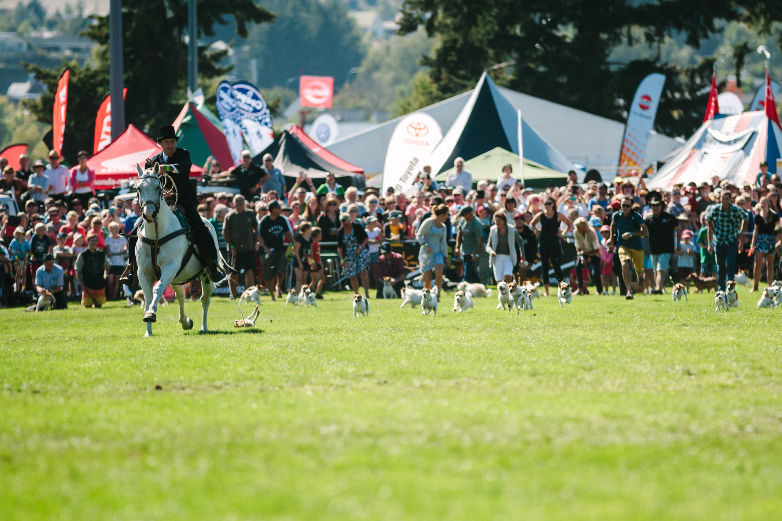 Engaging communities on behalf of the Wanaka A&P Show